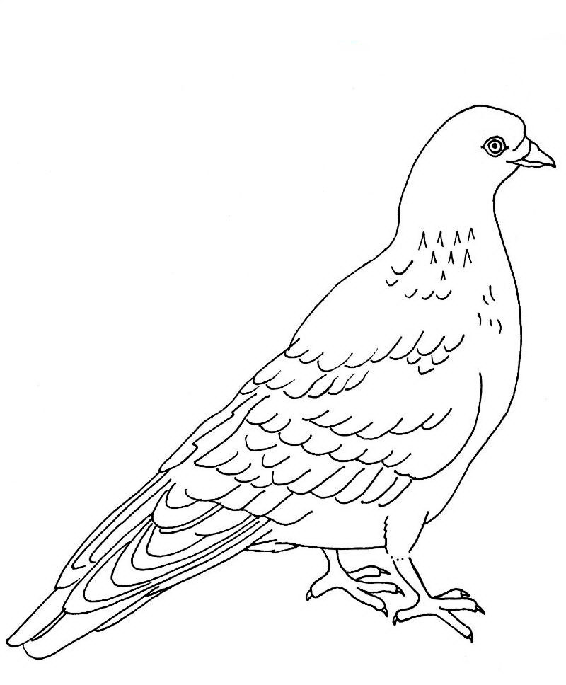 Fantastic Mourning Dove Coloring Page Images